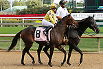 September 12, 2015:  #8 Put Da Blame On Me and jockey Albin Himenez in the $200,000 Grade 2 Pocahontas for 2 year old fillies at Churchill Downs.  Candice Chavez/ESW/CSM