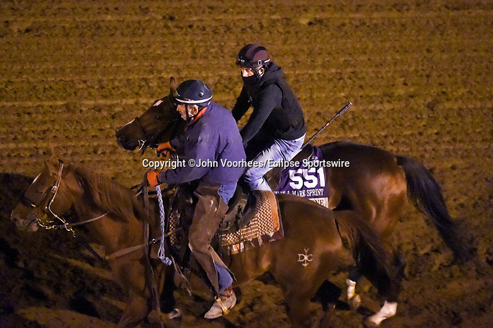 November 5, 2020: Bell's The One, trained by trainer Neil L. Pessin, exercises in preparation for the Breeders' Cup Filly & Mare Sprint at Keeneland Racetrack in Lexington, Kentucky on November 5, 2020. John Voorhees/Eclipse Sportswire/Breeders Cup/CSM