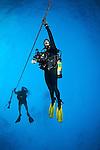 Divers on Safety Stop, The Eagle, Islamorada, Florida