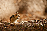 Rodents and Other Small Mammals