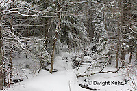 WT05-506z  Maine forest scene with snow cover