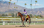 ARCADIA, CA JANUARY 30: #4 Express Train, ridden by Juan Hernandez, returns to the connections after winning the San Pasqual Stakes (Grade ll) on January 30, 2021 at Santa Anita Park in Arcadia, CA  (Photo by Casey Phillips/EclipseSportswire/CSM)