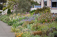 Amy Stewart's real, rambling, chaotic, dirty, bug-ridden front yard, flowery, no lawn, cottage meadow garden in Eureka, California
