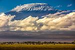 Kilimanjaro dwarfs a herd of African bush elephants (Loxodonta africana), Amboseli National Park, Kenya<br /> <br /> Canon EOS 5DS R, EF70-200mm f/2.8L IS II USM lens, f/10 for 1/250 second, ISO 250