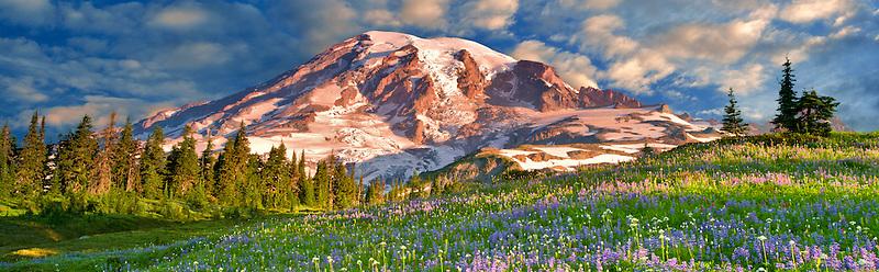 Wildflowers and Mt. Rainie. Mt. Rainier National Park, Washington Sky has beenm added