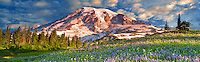 Wildflowers and Mt. Rainie. Mt. Rainier National Park, Washington Sky has beenm added