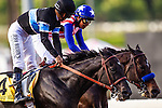 September 27 2014: Shared Belief with Mike Smith up  defeats Fed Biz and Martin Garcia to win the Awesome Again Stakes at Santa Anita Park in Arcadia CA. Alex Evers/ESW/CSM