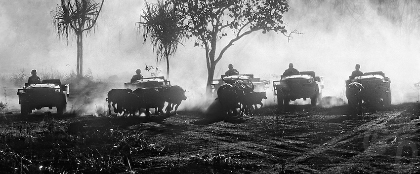 Buffalo Muster in the Northern Territory by 4x4 wheel drive jeeps