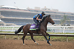 DEL MAR, CA - OCTOBER 31: Ribchester, owned by Godolphin Stable Lessee and trained by Richard A. Fahey, exercises in preparation for Breeders' Cup Mile during morning workouts at Del Mar Thoroughbred Club on October 31, 2017 in Del Mar, California. (Photo by Jesse Caris/Eclipse Sportswire/Breeders Cup)