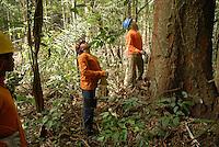 Madeireiro corta uma árvore de Muiracatiara em area de manejo sustentável para exploração madeireira da Cikel.<br /> Paragominas, Pará, Brasil<br /> Foto Paulo Santos/Interfoto<br /> 17/11/2008