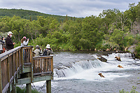 Tourists view brown bears at the Brooks Falls, Katmai National park, southwest, Alaska.