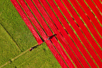Drying strips of red fabric by Mominul Islam Momin