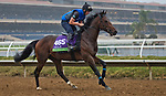 DEL MAR, CA - NOVEMBER 31: Ribchester, owned by Godolphin Stable Lessee and trained by Richard A. Fahey, exercises in preparation for Breeders' Cup Mile at Del Mar Thoroughbred Club on October 31, 2017 in Del Mar, California. (Photo by Jesse Caris/Eclipse Sportswire/Breeders Cup)