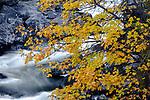 USA, Washington, Cascade Range, abstract, Icicle Creek