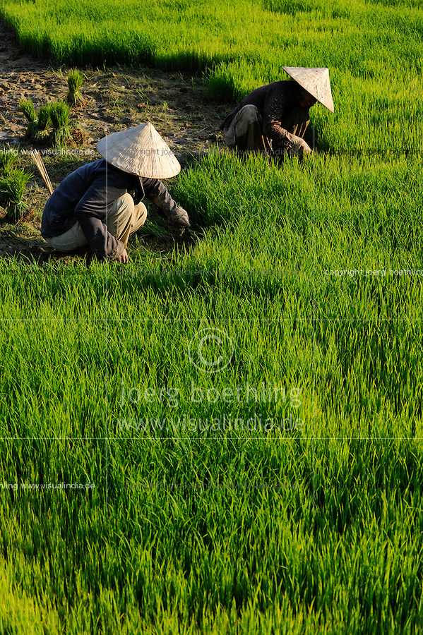 LAOS Vang Vieng , Reisfelder, Frauen pflanzen Reissetzlinge um / LAOS Vang Vieng, paddy fields, women replant rice plants from nursery to field - MORE PICTURES ON THIS SUBJECT AVAILABLE!!