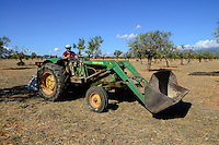SPAIN Mallorca, Binissalem, Finca Biniagual, almond trees, almond harvest, John Deere tractor with almond trashing machine / SPANIEN Mallorca, Binissalem, Finca Biniagual, Mandelbaeume, Mandelernte, John Deere Traktor mit Maschine zur Reinigung der Mandeln