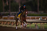 OCT 29: Breeders' Cup Classic entrant Code of Honor, trained by Claude R. McGaughey III, gallops at Santa Anita Park in Arcadia, California on Oct 29, 2019. Evers/Eclipse Sportswire/Breeders' Cup