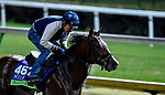 October 29, 2018 : Oscar Performance, trained by Brian A. Lynch, exercises in preparation for the Breeders' Cup Mile at Churchill Downs on October 29, 2018 in Louisville, Kentucky. Scott Serio/Eclipse Sportswire/CSM