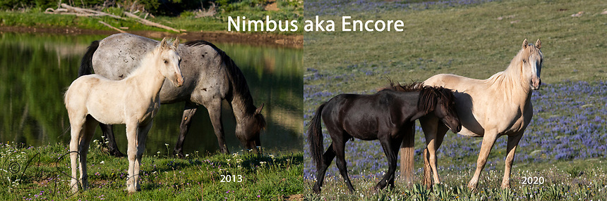 Nimbus was beautiful from day one. Daughter of Cloud she has grown into her own and is positively regal.