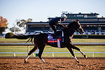 November 4, 2020: Nay Lady Nay, trained by trainer Chad C. Brown, exercises in preparation for the Breeders' Cup Filly & Mare Turf at Keeneland Racetrack in Lexington, Kentucky on November 4, 2020. Gabriella Audi/Eclipse Sportswire/Breeder's Cup/CSM