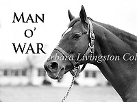 Man o' War, the Horse of the Century