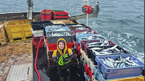 Sýimi O'Donnell of Porturlin, Co Mayo with boxes of line-caught mackerel on board his father Jonathan's boat