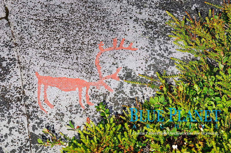 Petroglyph reindeer, Alta, North Norway, Norway, Europe