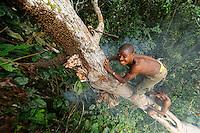 Surrounded by bees, the honey-hunter balancing on the tree trunk plunges his hand into the nest to harvest the honeycombs. In the N'Bensele clan, the best way to find a wife in the camp is to give her honey. A man has to know how to climb and not be afraid of stings.///Entouré d'abeilles, le chasseur en équilibre sur le tronc de l'arbre plonge sa main dans le nid pour récolter les galettes de miel. Dans le clan N'Bensélé, la meilleure façon de trouver une femme dans un campement c'est de lui offrir du miel. Un homme doit savoir grimper et ne pas avoir peur des piqures des abeilles.