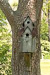 Tall, handmade fir house on side of tree trunk.