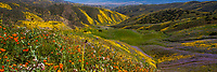 California spring wildflower superbloom panorama 2017, Carrizo Plains National Monument, California