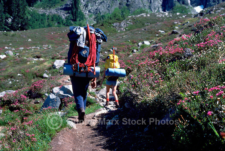 Backpackers backpacking along Trail in Alpine Meadows, Garibaldi Provincial Park, BC, British Columbia, Canada