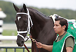 Rose Catherine, winner of last year's Turf Amazon Handicap at Parx Racing in Bensalem, PA, finished second to last in this year's twelve-horse field; on September 5, 2011.  (Joan Fairman Kanes/Eclipsesportswire)