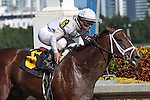 Constitution with Javier Castellano up wins his career debut in an Allowance race for 3 year olds at Gulfstream Park, Hallandale Beach Florida. 01-11-2014