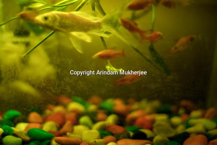 Dipmalya (Diya)'s aquarium at his home. Kolkata, India. Arindam Mukherjee