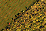 Aerial View of a fox hunt in Rappahannock County, Virginia