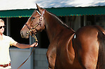 September 08, 2014:Hip #636 Smart Strike - Film Charm filly consigned by Lane's End at the Keeneland September Yearling Sale.   Candice Chavez/ESW/CSM