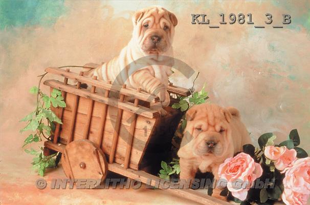 Interlitho, ANIMALS, dogs, photos(KL1981-3/B,#A#) Hunde, perros
