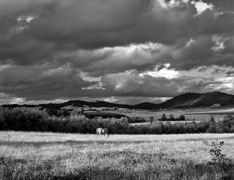 Horse in pasture with cloudy sky. Near Monroe, Oregon.