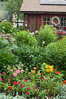 Barn shed rustic, annuals mixed colorful zinnias, perennials, cleome, flowers, wreath, roof window, rudbeckia, Maclayea ornamental grass, Stachys lambs ears