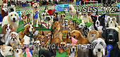 Lori, REALISTIC ANIMALS, REALISTISCHE TIERE, ANIMALES REALISTICOS, zeich, paintings+++++Dog Show Panorama_5_72_10in,USLS172,#a#, EVERYDAY ,puzzle,puzzles