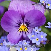 Gisela, FLOWERS, BLUMEN, FLORES, photos+++++,DTGK2470,#f#, EVERYDAY