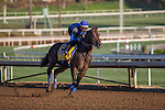 OCT 29 2014:Bayern, trained by Bob Baffert, exercises in preparation for the Breeders' Cup Classic at Santa Anita Race Course in Arcadia, California on October 29, 2014. Kazushi Ishida/ESW/CSM