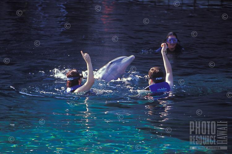 Trainers and tourists with dolphins at the Hilton Waikoloa, Big Island of Hawaii