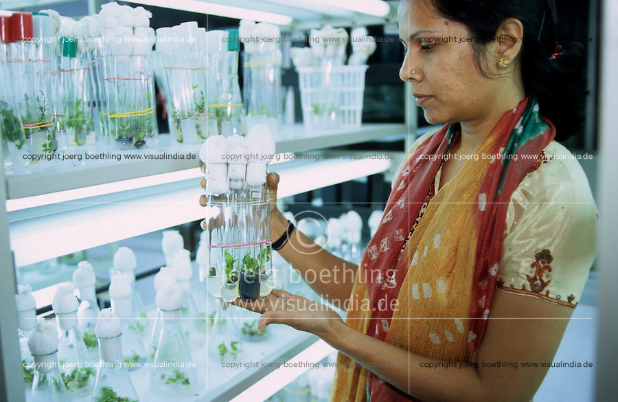 India Bhavnagar , indian scientist in lab, research on Jatropha ( Purging Nut or Jatropha curcas Linnaeus ) a oil plant for production of bio diesel , project of Salt and Marine chemicals research Institut in Bhavnagar and Daimler AG , ADM and Bayer Cropscience