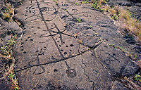 Puu Loa petroglyph field, the largest concentration of petroglyphs in Hawaii,  Hawaii Volcanoes National Park