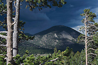 Mountain and Pine trees,Rocky Mountain National Park, Colorado, USA