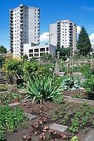 Community Urban Garden, North Vancouver, BC, British Columbia, Canada - Sustainable Gardening on City Allotment