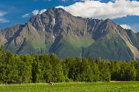 Pioneer Peak in Palmer, Alaska, sets the backdrop for this vegetable farm in the Matanuska Susitna Valley just north of Anchorage.