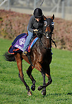 4 November 2010: Miss Keller (IRE), trained by Roger L. Attfield and to be ridden by jockey Javier Castellano, during work outs for the 2010 Breeders Cup at Churchill Downs in Louisville, Kentucky.(Scott Serio/Eclipse Sportswire)