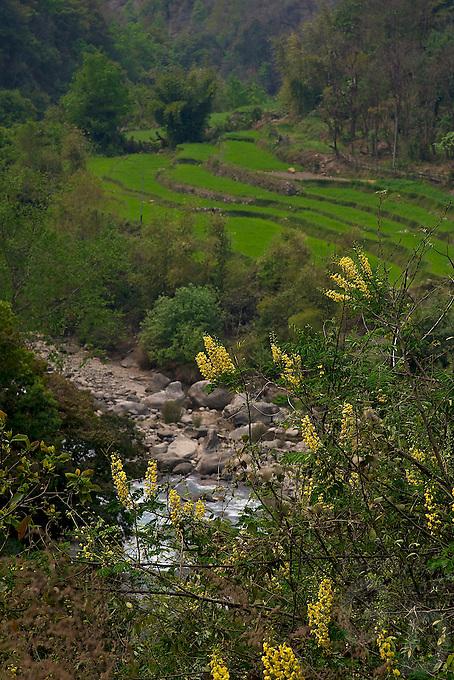 Trongsa to Thimphu, Bhutan.Valleys, flowers  and  Vegetation along the road.